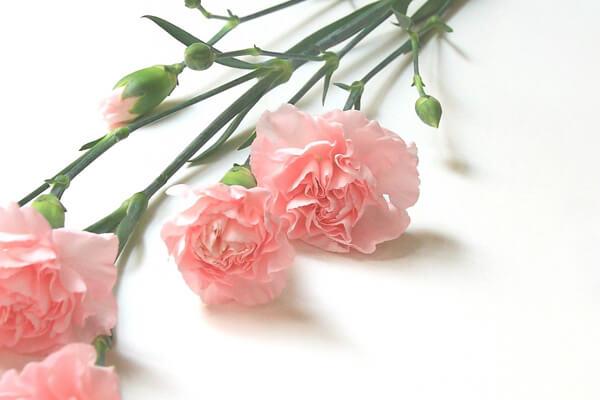 12月2日の誕生花 スプレーカーネーション