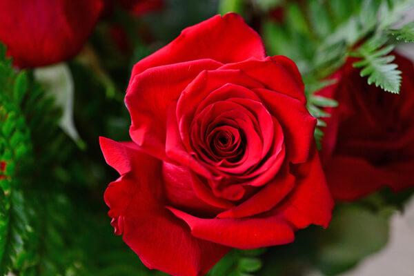 5月21日の誕生花 バラ