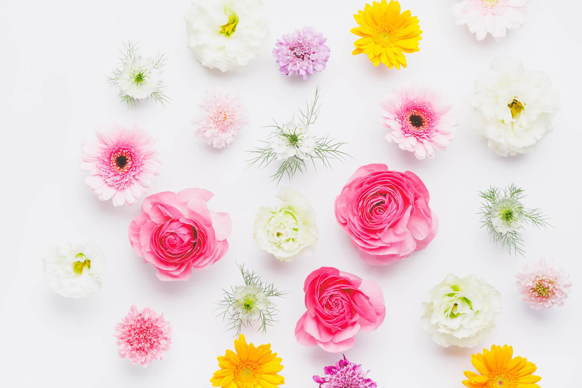 365日の誕生花