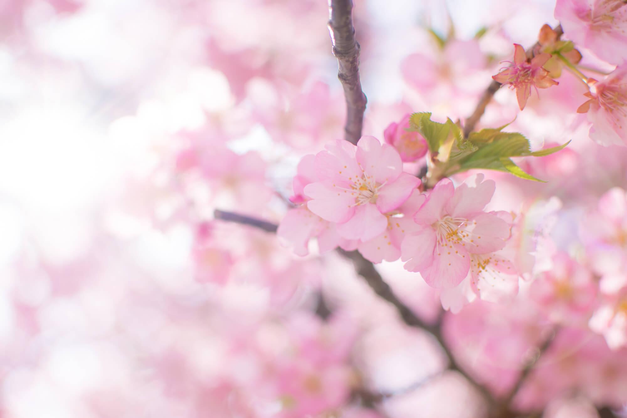 4月の誕生花カレンダー
