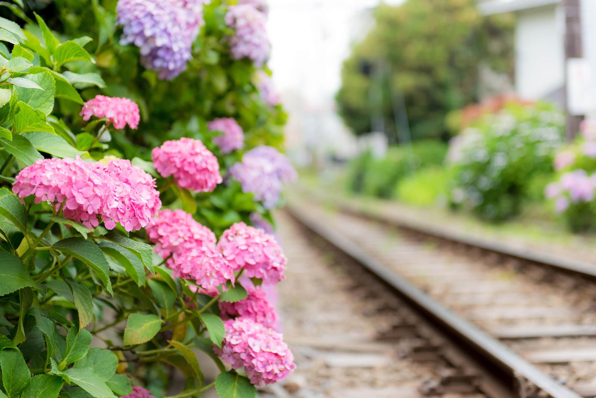 6月の誕生花カレンダー