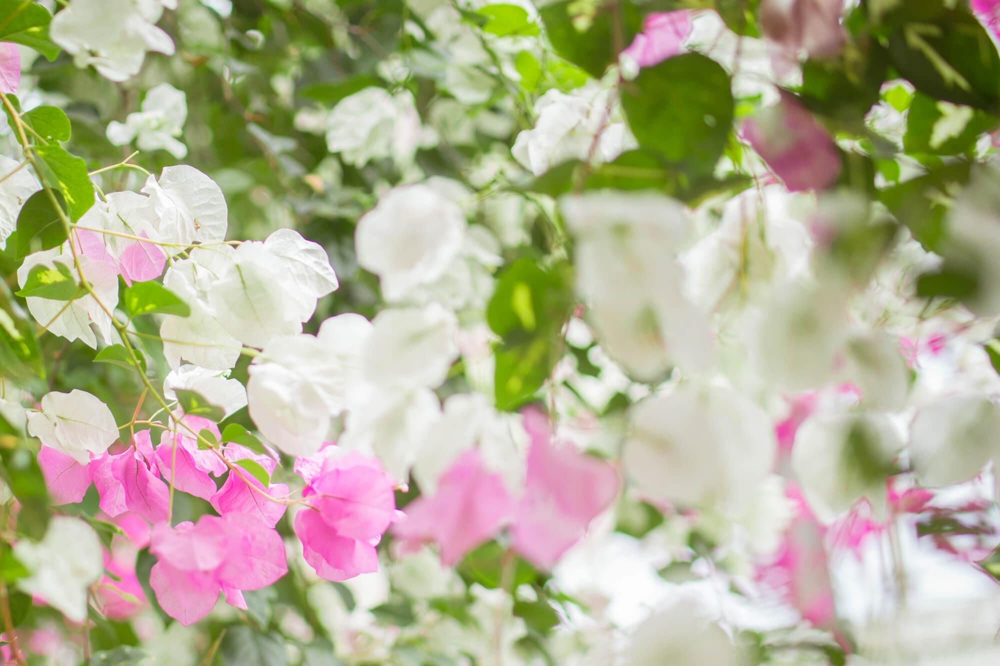 8月の誕生花カレンダー