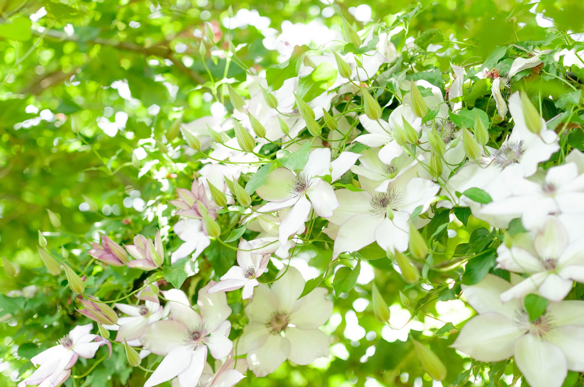 10月の誕生花カレンダー