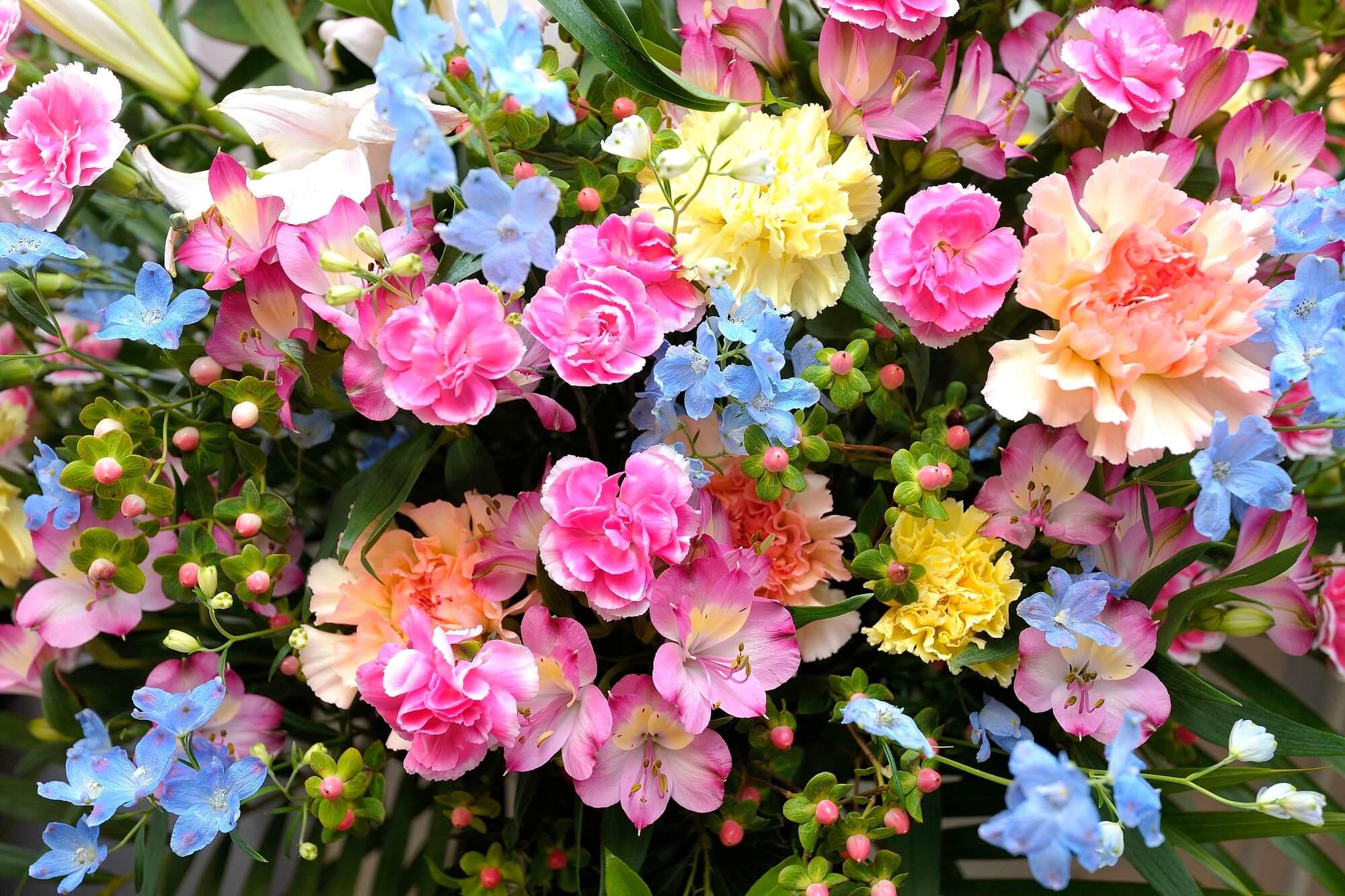 アメリカ版!月ごとの誕生花12種類
