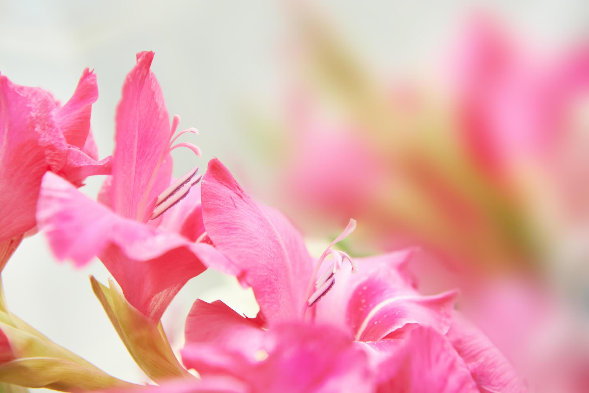 誕生花をチェック!笑顔になれるフラワーギフトを贈ろう