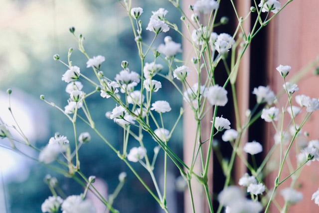 ◆4位:カスミソウ | 結婚記念日に贈りたい【花言葉】ランキング特集!