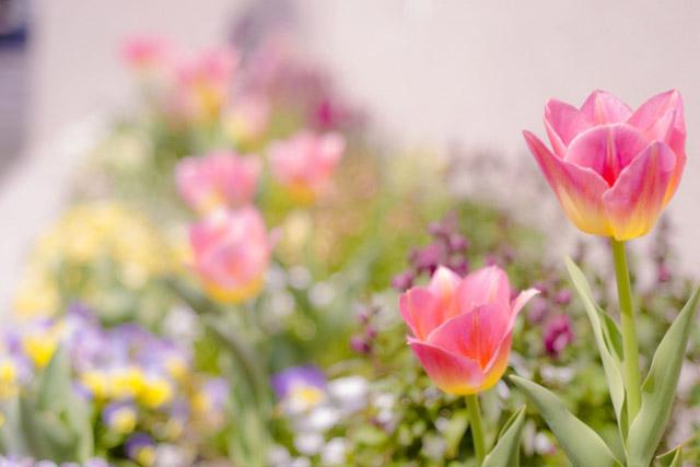◆2位:トルコキキョウ | 結婚記念日に贈りたい【花言葉】ランキング特集!