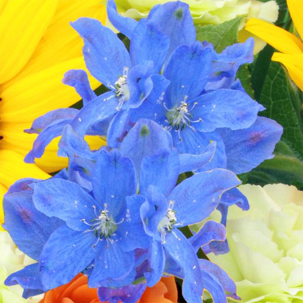 3:青系の小花 |男性へのプレゼントに人気