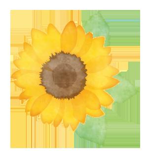 花の種類から探す▼|花キューピットの父の日におすすめ!人気のフラワーギフト特集 2021