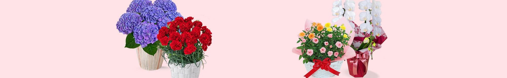 花キューピットの母の日 産直花鉢特集 2019