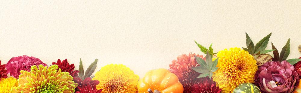 花キューピットの秋の花贈り特集
