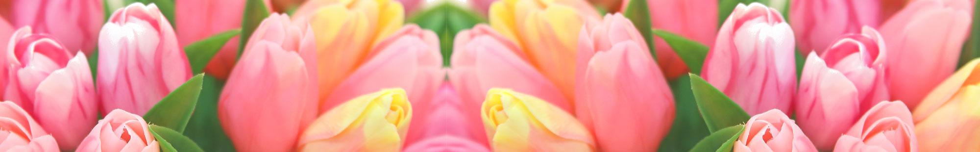 花キューピットのチューリップ特集2021