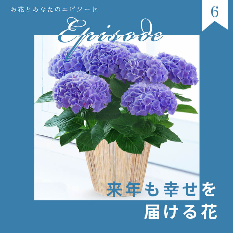 来年も幸せを届ける花