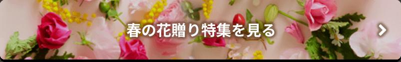 春の花贈り特集を見る