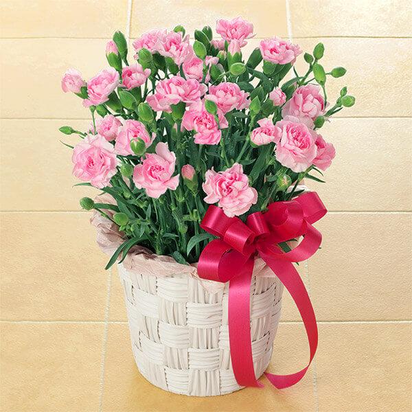母の日に、息子から花束や花鉢のプレゼント。お母さんの本音は?