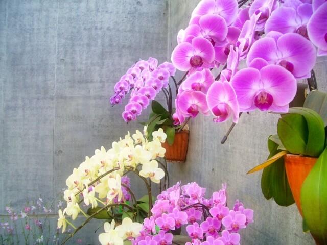 長く花を楽しめる