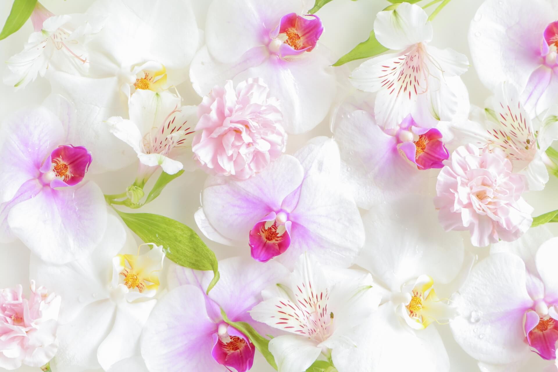 胡蝶蘭を注文するなら花キューピット