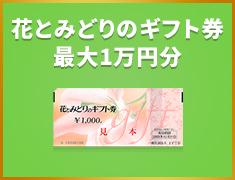 花とみどりのギフト券 最大1万円分