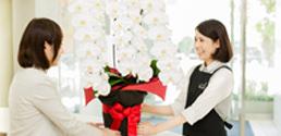 お花屋さんが 直接お届けする 胡蝶蘭が選ばれる理由