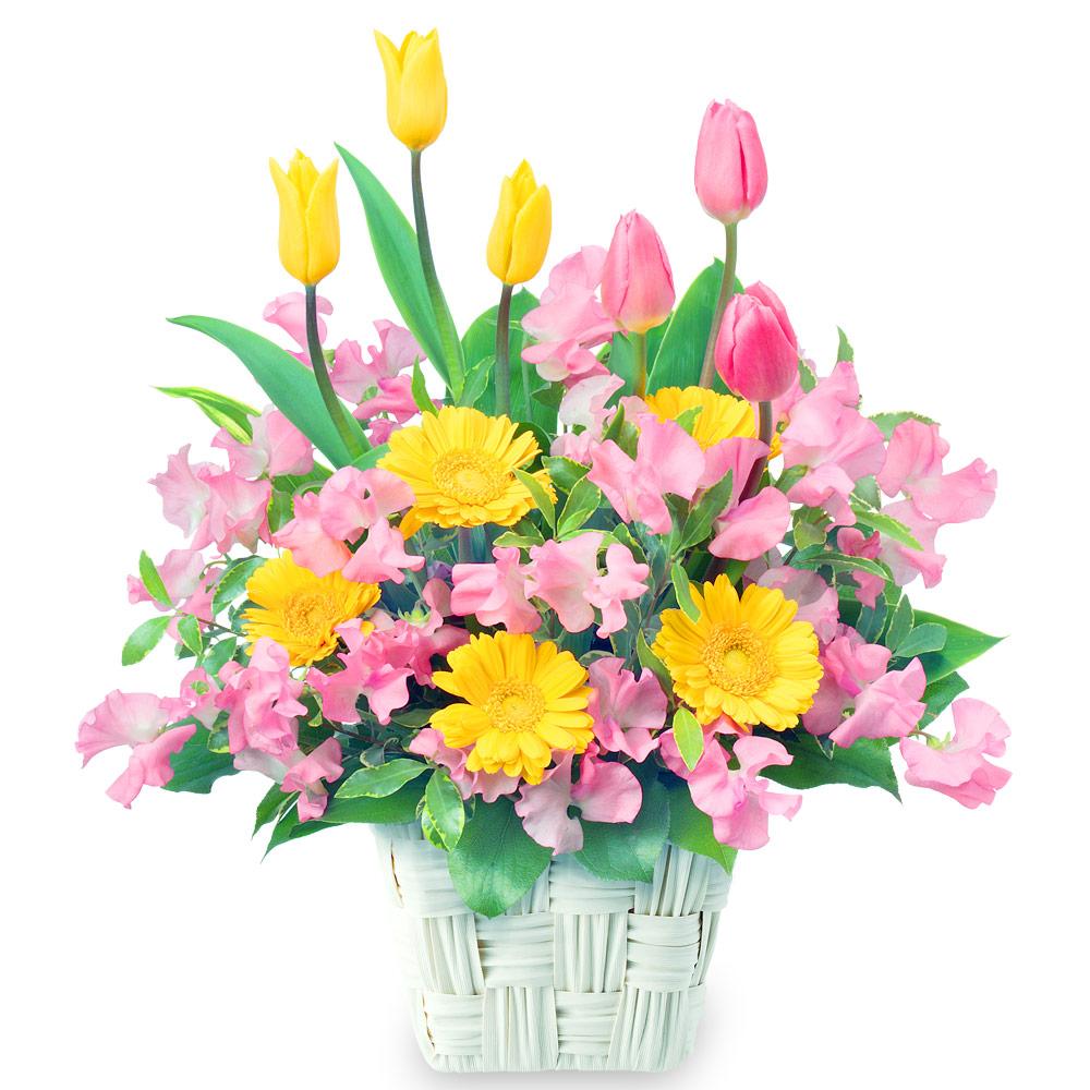 【チューリップ】春のバスケットアレンジメント 111028 |花キューピットのチューリップ特集