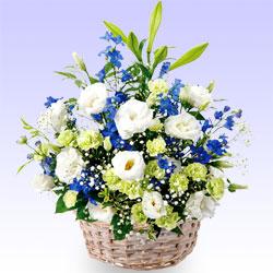 その他お祝いのお花のおすすめ・アレンジメント |花キューピットの当日配達特急便(クイック)