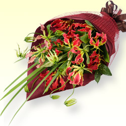 【お祝い】グロリオサの花束