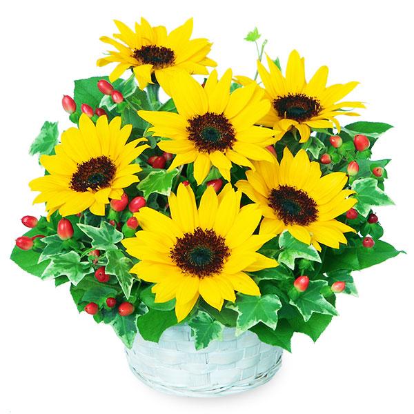 【父の日】ひまわりのアレンジメント 511139 |花キューピットの父の日フラワーギフト特集2020