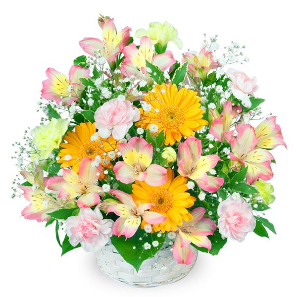 【卒業・入学祝い】アルストロメリアのアレンジメント 511275 |花キューピットの卒業・入学祝い