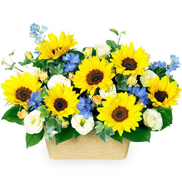 【父の日】ひまわりのアレンジメント 511381 |花キューピットの父の日フラワーギフト特集2020