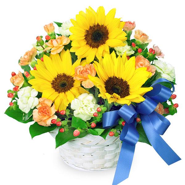【ひまわり特集】ひまわりとブルーリボンのアレンジメント 511390 |花キューピットのひまわり特集2020