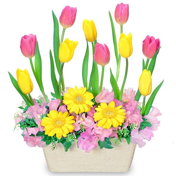 【チューリップ特集】チューリップのガーデンアレンジメント 511742 |花キューピットの2019チューリップ特集特集