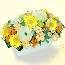 【誕生日フラワーギフト】イエローガーベラのアレンジメント