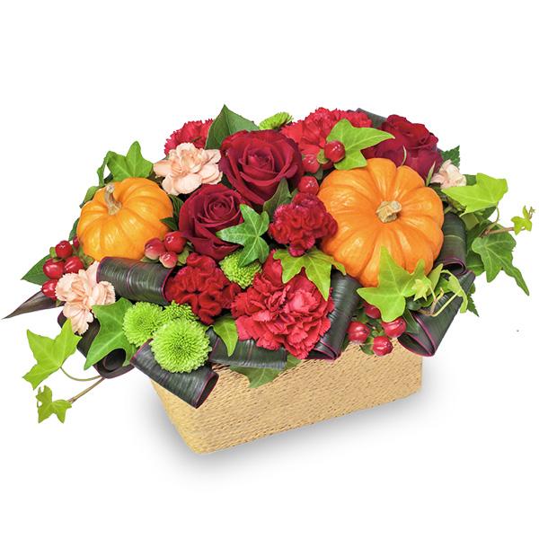 【秋の誕生日】ハロウィンのパンプキンアレンジメント 511915 |花キューピットの秋の誕生日特集