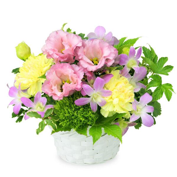 【夏の花贈り特集】トルコキキョウとデンファレのバスケット 511983 |花キューピットの夏の花贈り特集2020