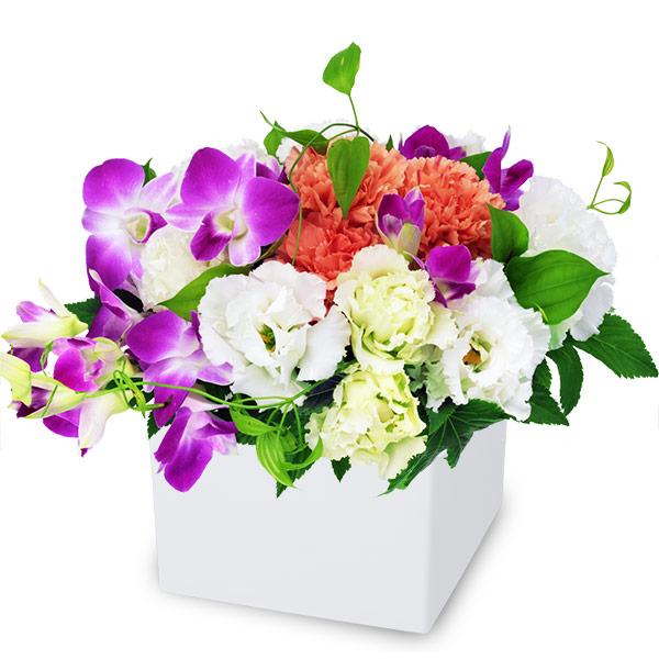 【9月の誕生花(デンファレ等)】デンファレのキューブアレンジメント