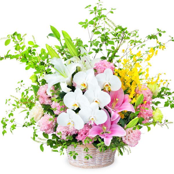 【夏の花贈り特集】ピンクユリと胡蝶蘭のアレンジメント 512115 |花キューピットの夏の花贈り特集2020