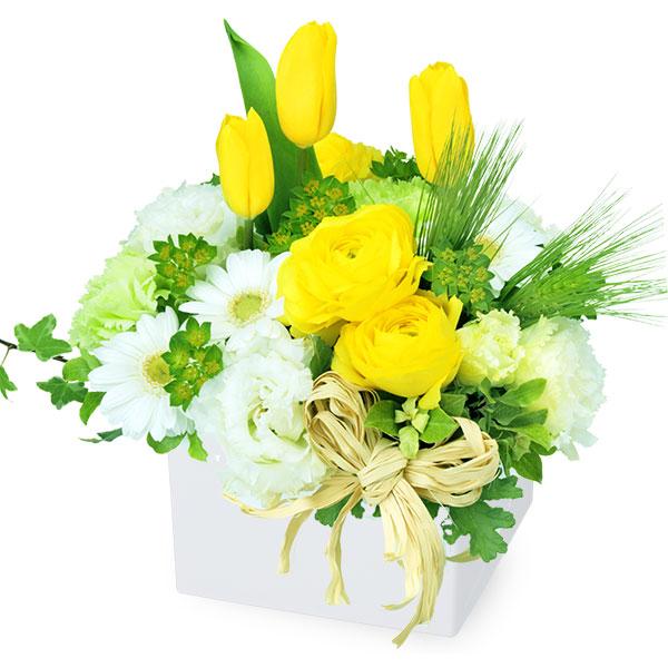 【チューリップ特集】イエローとホワイトのキューブアレンジメント 512166 |花キューピットの2019チューリップ特集特集