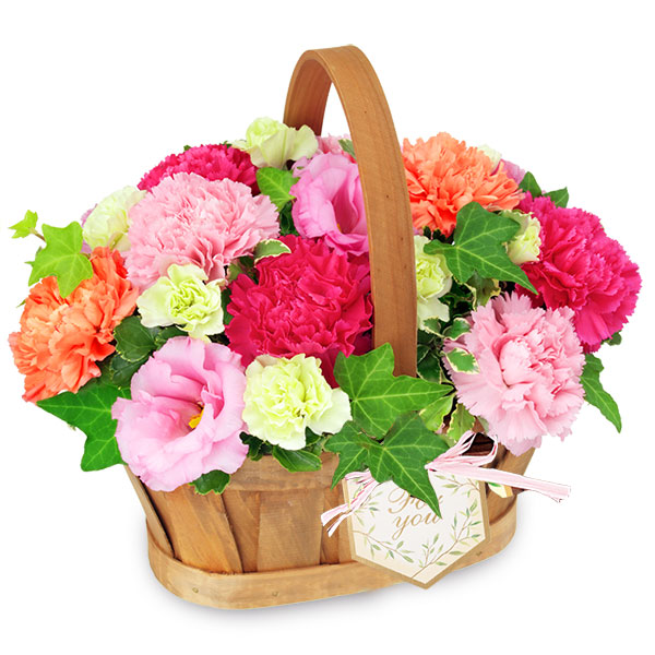 【夏の花贈り特集】カーネーションのハーモニーバスケット 512243 |花キューピットの夏の花贈り特集2020