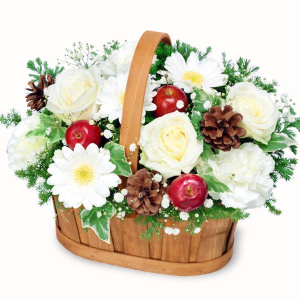 【冬の花贈り】白ガーベラのウィンターバスケット 512275 |花キューピットの冬の花贈り
