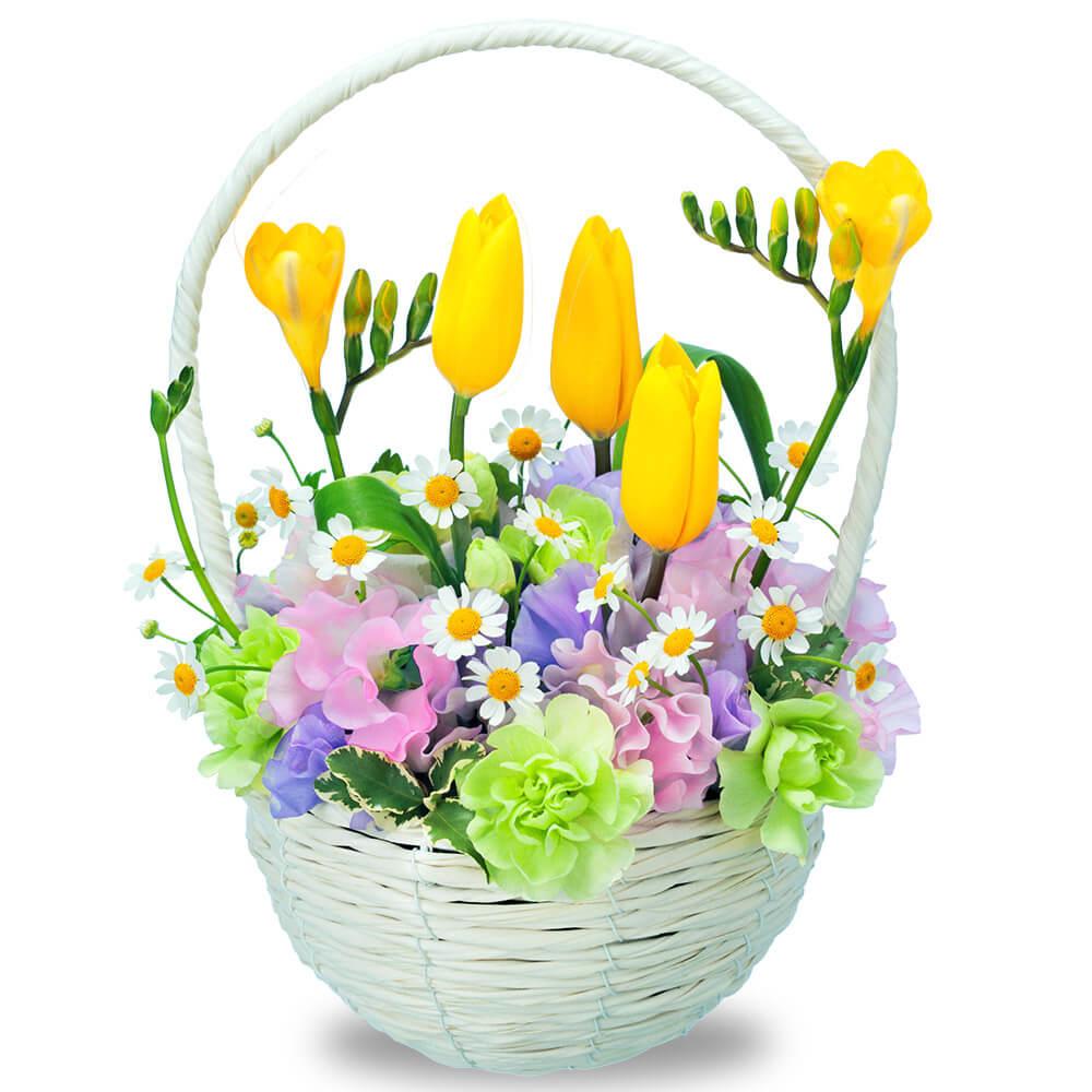 【チューリップ特集】イエローチューリップのナチュラルバスケット 512334 |花キューピットの2019チューリップ特集特集