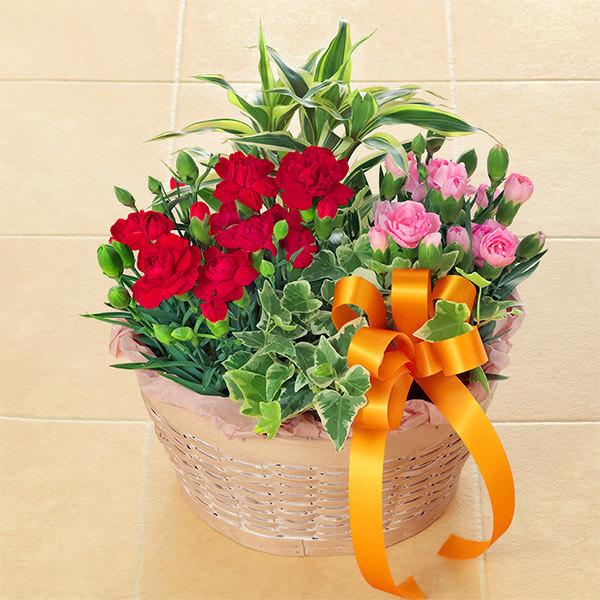 【母の日】カーネーション鉢の寄せ鉢 521301 |花キューピットの母の日プレゼント特集2020
