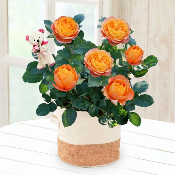 【母の日】バラ ベビーロマンティカ(クマのピック付き) 711174 |花キューピットの2019母の日プレゼント特集