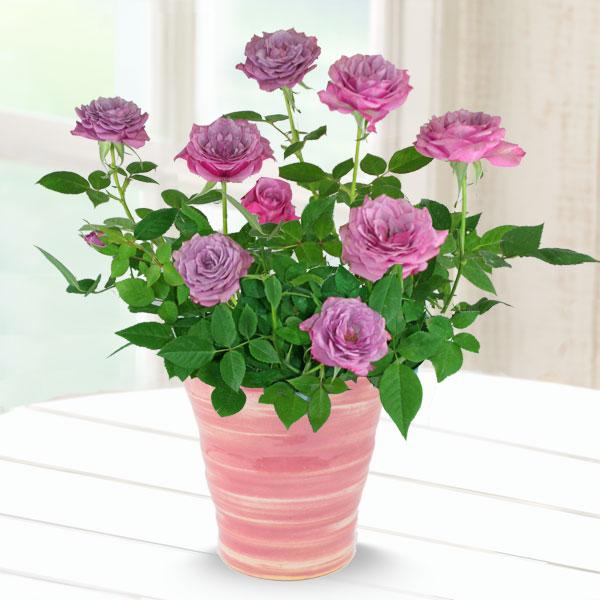 【母の日】バラ ブルーオベーション 711177 |花キューピットの2019母の日プレゼント特集