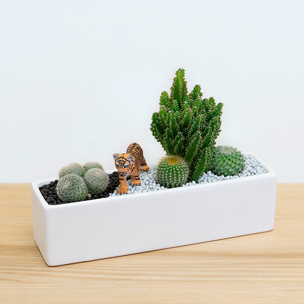 【産直 サボテン・多肉植物】サボテン寄せ植え(トラ)