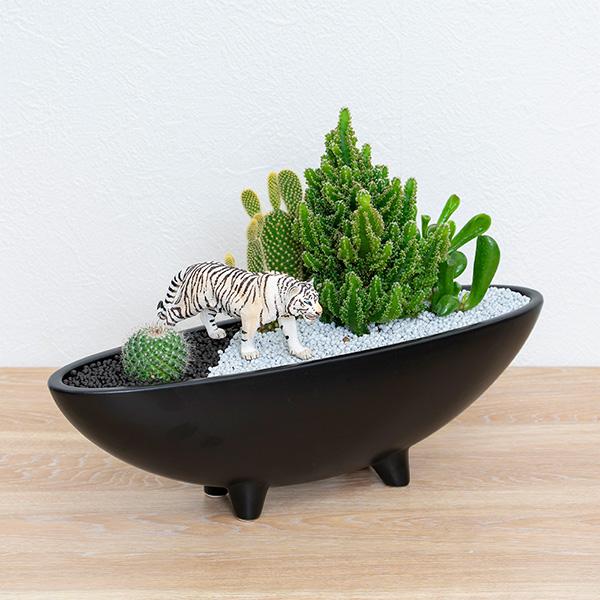 【産直 サボテン・多肉植物】サボテン寄せ植え(ホワイトタイガー)