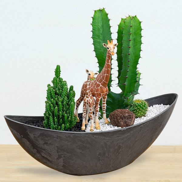 【産直 サボテン・多肉植物】サボテン寄せ植え(キリンの親子)