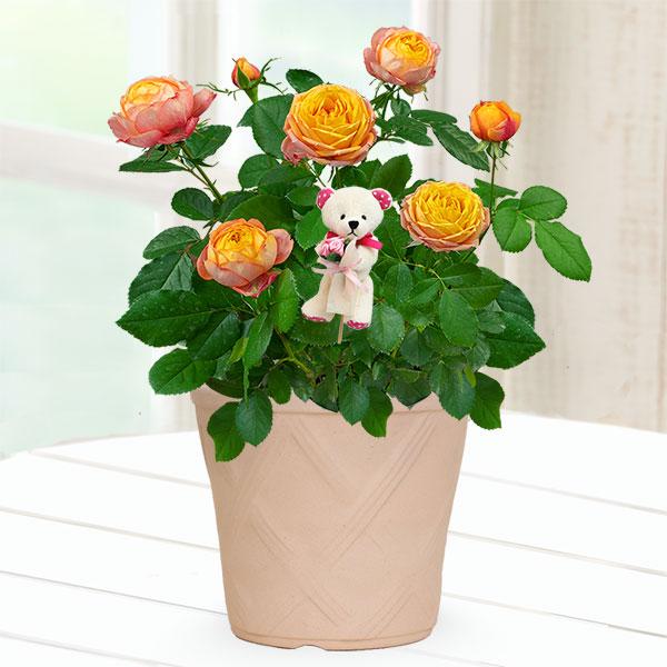 【母の日産直】バラ ベビーロマンティカ(クマのピック付き) 711483 |花キューピットの母の日産直プレゼント特集2021