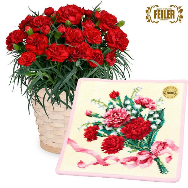 【母の日 産直ギフト】赤カーネーション鉢と【フェイラー】ディアフラワー5 ハンカチ