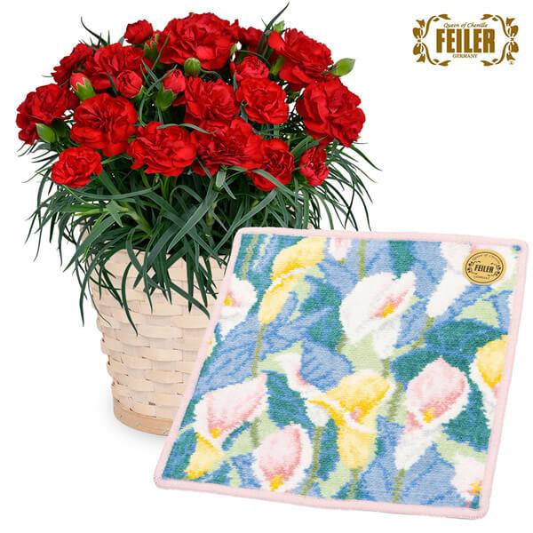 【母の日 産直ギフト】赤カーネーション鉢と【フェイラー】フェリークカラー ハンカチ