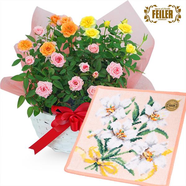 【敬老の日】ミニバラ3色の寄せ鉢(白かご)と【フェイラー】ディアフラワー7 ハンカチ